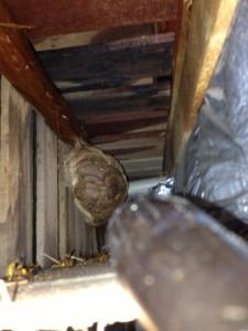壁の中に蜂の巣