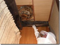 天井裏にハチの巣
